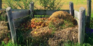 compost-pile-100722-02
