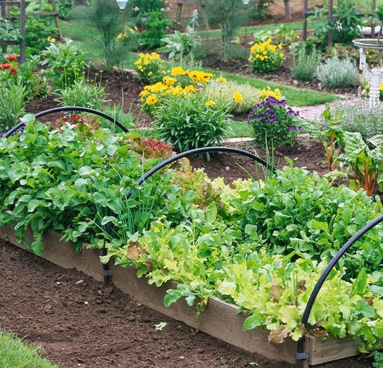 fall veggie garden